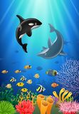 Killer whales and dolphin cartoon with underwater view. And coral background Royalty Free Stock Photography