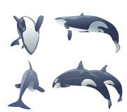 Killer whales jumping. Set of killer whales jumping on white. vector illustration Stock Images