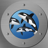 Killer whales in porthole Stock Image