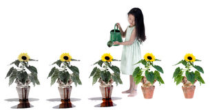 Killing our planet. A sunflower bleeds from the poisons poured onto it by a young innocent child. Without knowing it we are all destroying our environment Royalty Free Stock Photos
