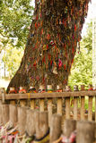 Killing tree against which executioners beat children - Choeung Ek Killing Fields Stock Image