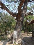 Killing tree Stock Images