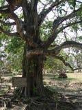 Killing tree Royalty Free Stock Photography
