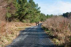 Killykeen forest, Co. Cavan, Ireland Stock Photography