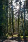 Killykeen Forest Park Image libre de droits