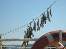 Kilyos istanbul salted fish Royalty Free Stock Photo