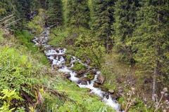 Kimasarovskoe gorge. Stock Image