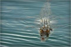kimberley słony Obraz Royalty Free