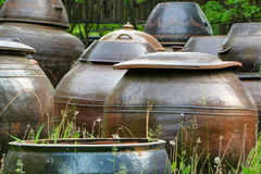 Kimchi jars Stock Images