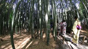 Kimono women in Bamboo Forest stock video