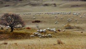 Kina Bashang grässlättlandskap royaltyfri fotografi