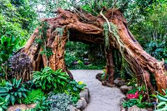Kina Shanghai botanisk trädgårdväxthus 11 arkivbilder