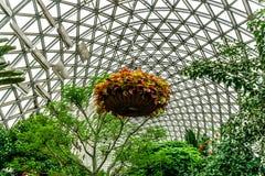 Kina Shanghai botanisk trädgårdväxthus royaltyfria foton
