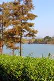 Kina Tai Hu berömd scenisk sjö arkivbild