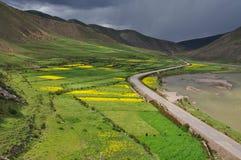 Kina Tibet Zuogong våldtar blommor Royaltyfria Bilder