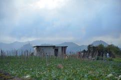 Kinabalu沙巴山麓小丘的菜农场  图库摄影