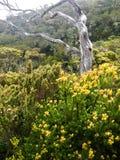 Kinabalu mountain Stock Photo