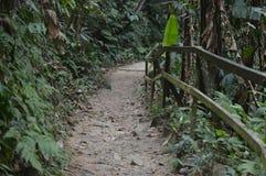 Kinabalu-Park Kundasang stockfotos