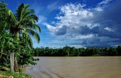 Kinabatangan flod royaltyfri bild