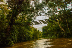 Kinabatangan-Fluss, Regenwald von Borneo-Insel, Sabah Malaysia Lizenzfreie Stockfotos