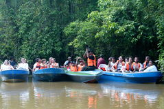 Kinabatangan Fluss-Safari Stockbilder