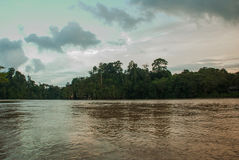 Kinabatangan river, rainforest of Borneo island, Sabah Malaysia. Evening landscape of trees near the water. Kinabatangan river, Evening landscape of trees near Royalty Free Stock Photography