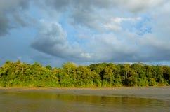Kinabatangan river, Malaysia, Borneo Royalty Free Stock Image