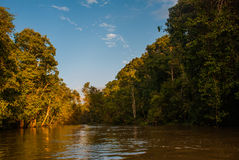 Kinabatangan river, rainforest of Borneo island, Sabah Malaysia Royalty Free Stock Photo