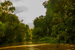 Kinabatangan river, rainforest of Borneo island, Sabah Malaysia. Kinabatangan river, Malaysia, rainforest of Borneo island Sabah stock photos