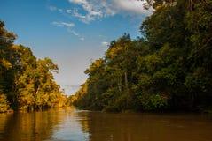Kinabatangan river, rainforest of Borneo island, Sabah Malaysia. Kinabatangan river, Malaysia, rainforest of Borneo island Sabah stock image