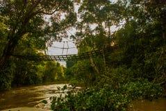 Kinabatangan river, rainforest of Borneo island, Sabah Malaysia. Kinabatangan river, Malaysia, rainforest of Borneo island Sabah royalty free stock images