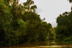 Kinabatangan river, rainforest of Borneo island, Sabah Malaysia. Kinabatangan river, Malaysia, rainforest of Borneo island Sabah stock photography
