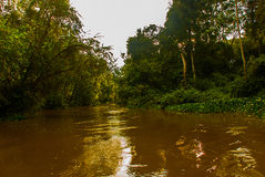 Kinabatangan river, rainforest of Borneo island, Sabah Malaysia Royalty Free Stock Photos