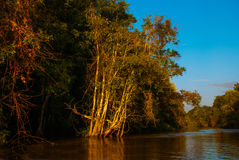 Kinabatangan river, rainforest of Borneo island, Sabah Malaysia. Evening landscape of trees near the water. Kinabatangan river, Evening landscape of trees near Royalty Free Stock Photos