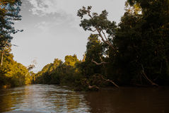 Kinabatangan river, rainforest of Borneo island, Sabah Malaysia. Evening landscape of trees near the water. Kinabatangan river, Evening landscape of trees near Stock Photography