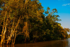 Kinabatangan river, rainforest of Borneo island, Sabah Malaysia. Evening landscape of trees near the water. Kinabatangan river, Evening landscape of trees near Stock Image