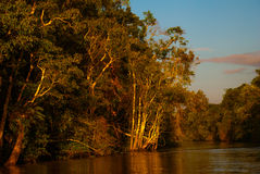 Kinabatangan river, rainforest of Borneo island, Sabah Malaysia. Evening landscape of trees near the water. Kinabatangan river, Evening landscape of trees near Stock Images