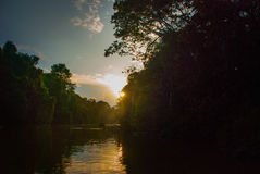 Kinabatangan river, rainforest of Borneo island, sunset. Sabah Malaysia Royalty Free Stock Images