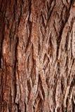 Kinaboom Royalty-vrije Stock Foto's