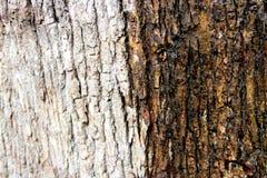 Kinaboom in kleuren Stock Fotografie