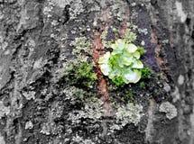 Kinaboom in kleuren Stock Afbeelding