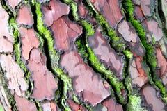 Kinaboom in kleuren Stock Afbeeldingen