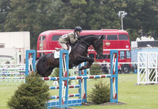 Kincooley Cruising Jumping a Fence Royalty Free Stock Photography