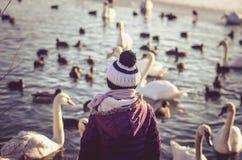 Kind achtermening en groep zwanen en eend op waterspiegel royalty-vrije stock fotografie