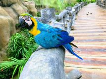 A kind of beautiful bird in Vietnam stock images