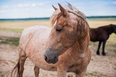 Kind beautiful horse stock photos