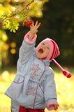 Kind betrachtet Herbstbeeren Stockbilder