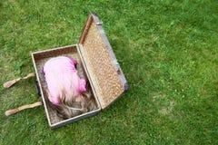 Kind blond meisje binnen een koffer op groen grasgazon Royalty-vrije Stock Afbeeldingen