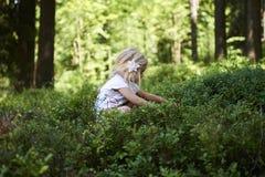 Kind blond meisje die verse bessen op bosbessengebied plukken in bos Stock Afbeeldingen