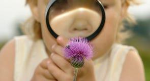 Kind, das Blume durch Vergrößerungsglas betrachtet Lizenzfreies Stockbild